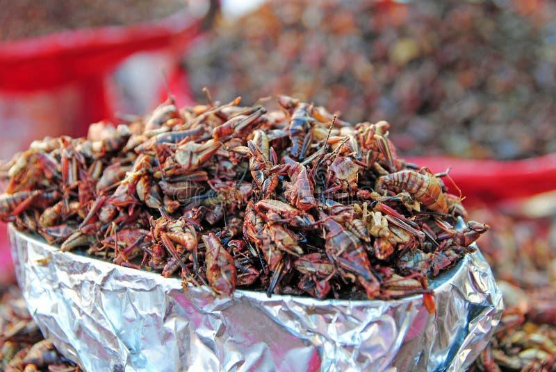 Chapulines, мексиканская еда стоковые изображения rf