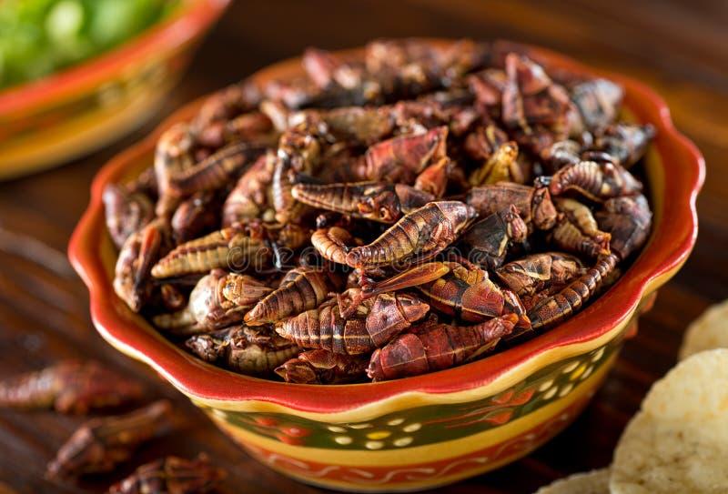 Chapulines Fried Mexican Grasshoppers fotografía de archivo libre de regalías