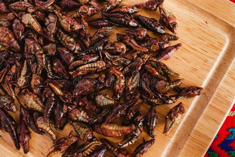 Chapulines, grasshoppers παραδοσιακή μεξικάνικη κουζίνα πρόχειρων φαγητών από Oaxaca Μεξικό στοκ φωτογραφία