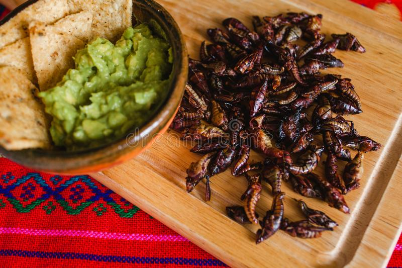 Chapulines, grasshoppers snack traditional Mexican cuisine from Oaxaca mexico. Chapulines, grasshoppers and guacamole snack traditional Mexican cuisine from royalty free stock photography