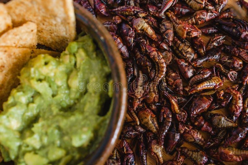 Chapulines, sprinkhanen en guacamole snack traditionele Mexicaanse keuken van Oaxaca Mexico royalty-vrije stock foto's