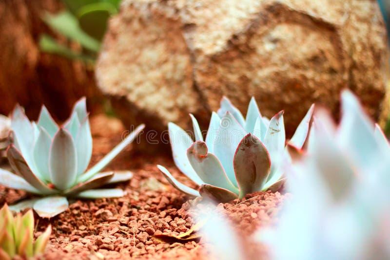 Chapultepec-Blumen, Mexikaner-Parks, weiße Blume lizenzfreies stockbild
