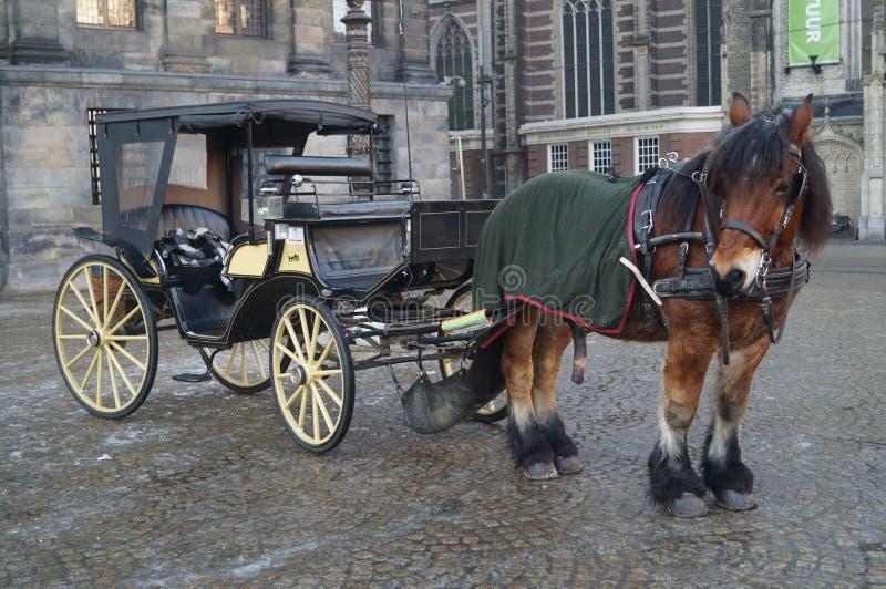 Char de cheval photos libres de droits