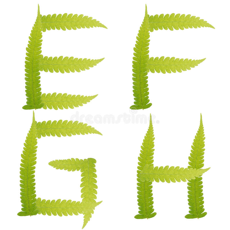 Download Character Green Leaves Fern Isolated Stock Photo - Image of green, alarm: 24667030