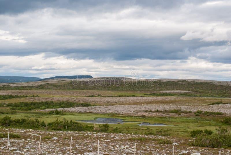 tundra characteristic