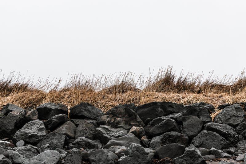 Charakter islandzki: czarne kamienie i trawa na wybrzeżu Tło nordyckie z kamieniami lawowymi i trawą zdjęcie royalty free
