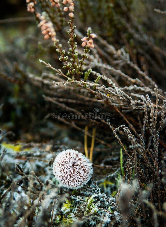 charakter leśna zimy słońca zdjęcie royalty free