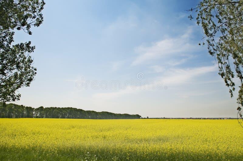 charakter rolnictwa krajobrazu lato obraz stock