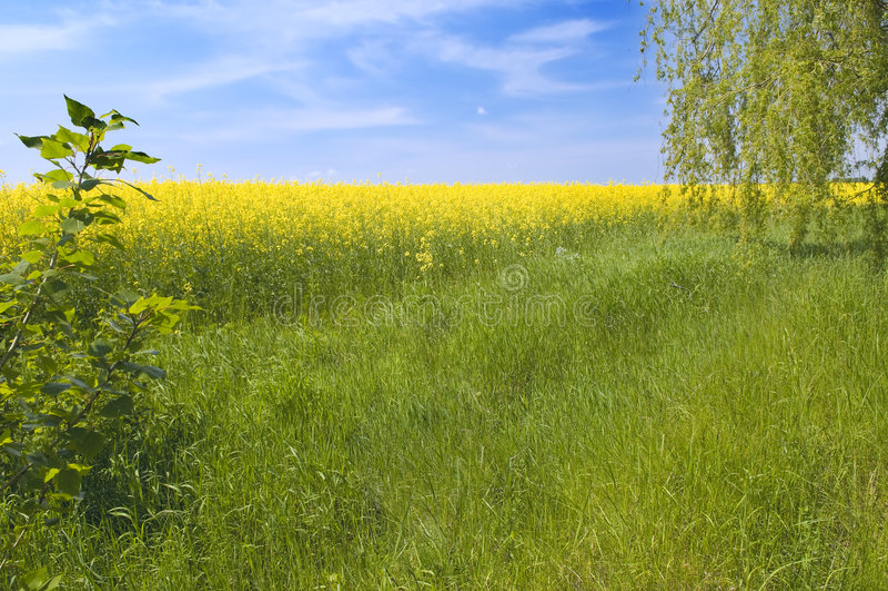 charakter rolnictwa krajobrazu lato obrazy stock