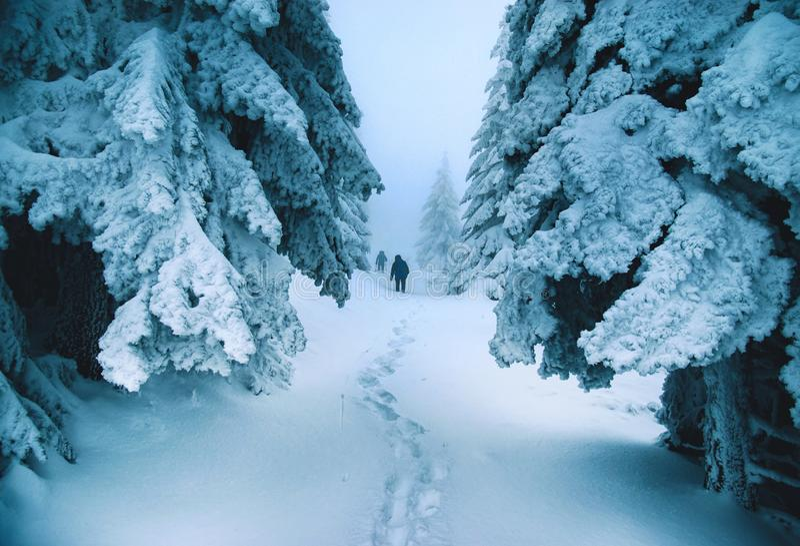 Charaktere im Nebel in der düsteren Landschaft des Winters lizenzfreies stockbild