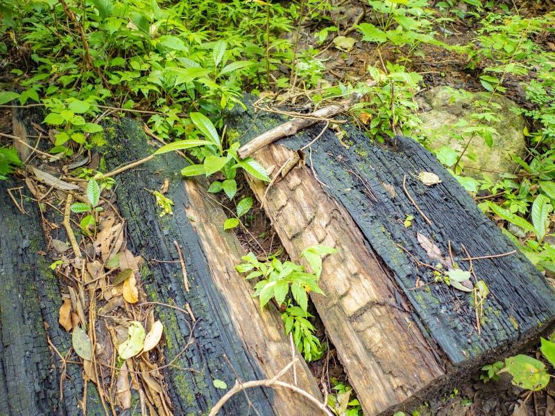 Charbon de bois près du passage couvert jusqu'au dessus de la montagne de Khao Luang en parc national de Ramkhamhaeng, photos stock