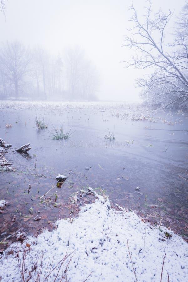 Charca congelada con pocos árboles por mañana de niebla imágenes de archivo libres de regalías