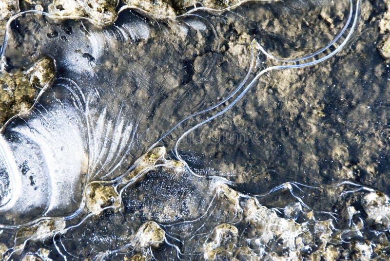 Charca congelada - hielo y agua imagen de archivo