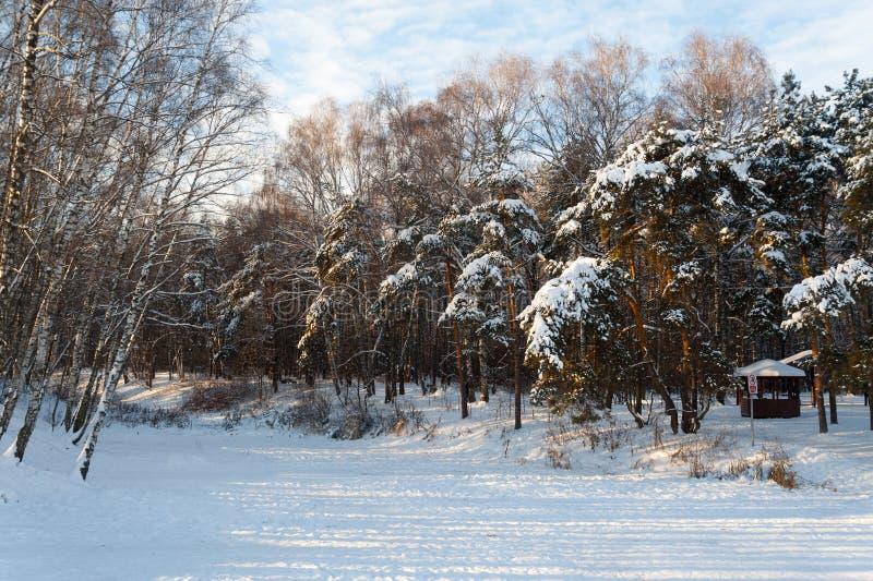 Charca cubierta con hielo y árboles cubiertos con la nieve 09 01 2019 imagen de archivo