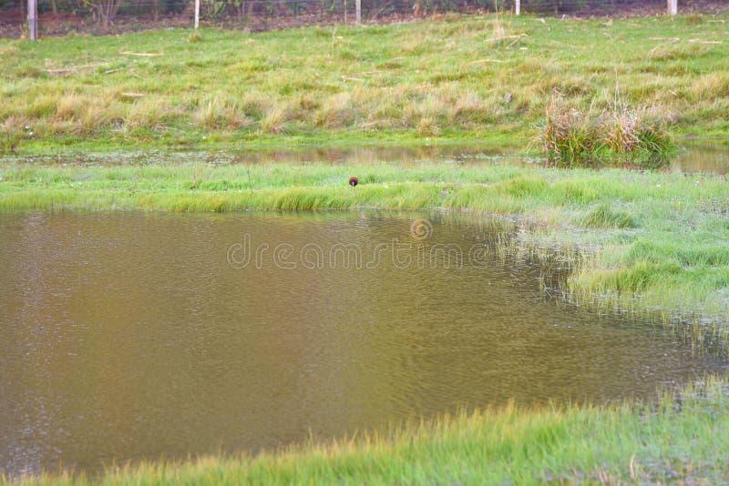 Charca de agua dulce en el amanecer 02 fotos de archivo libres de regalías