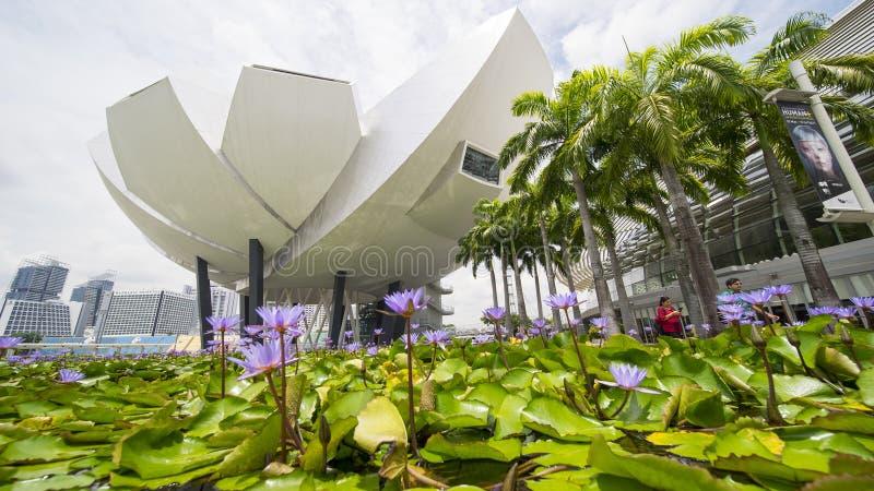 Charca de Lotus delante del museo de ArtScience fotografía de archivo libre de regalías