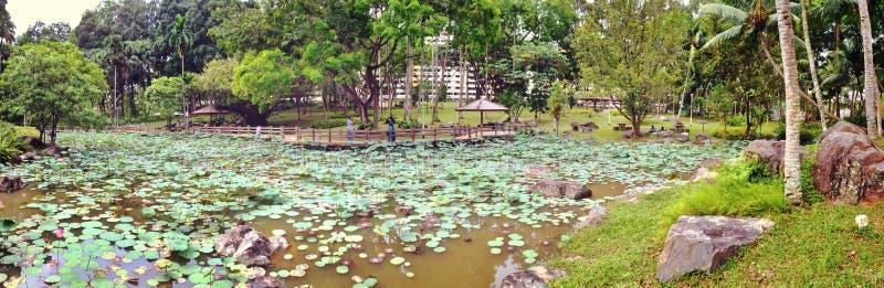 Charca de Lotus - parque del Bishan-ANG Mo Kio fotos de archivo