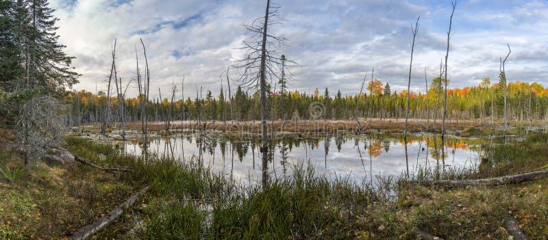 Charca del castor en el otoño - Ontario, Canadá imagen de archivo libre de regalías