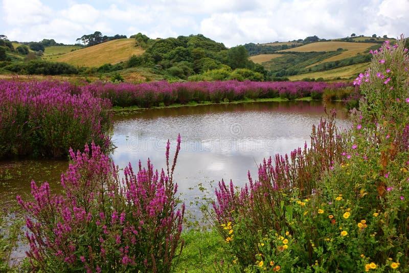 Charca del país con las flores coloridas coloridas en Brixham Devon imagenes de archivo