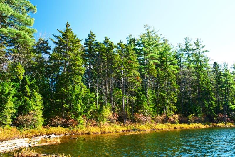 Charca en el bosque del Estado blanco de la montaña, New Hampshire imagenes de archivo