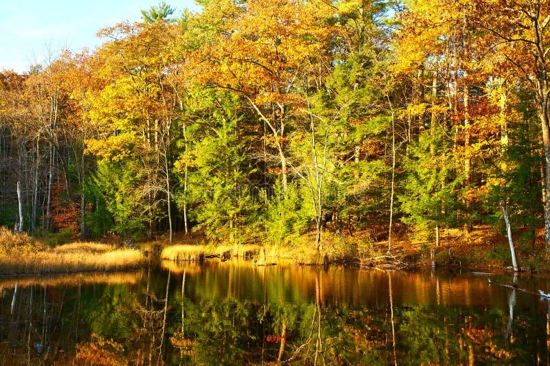 Charca en el bosque del Estado blanco de la montaña, New Hampshire fotografía de archivo
