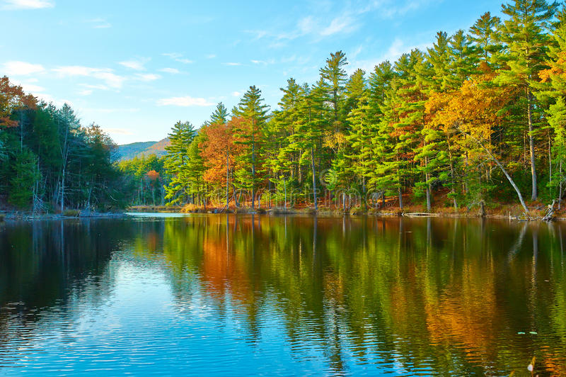 Charca en el bosque del Estado blanco de la montaña, New Hampshire foto de archivo