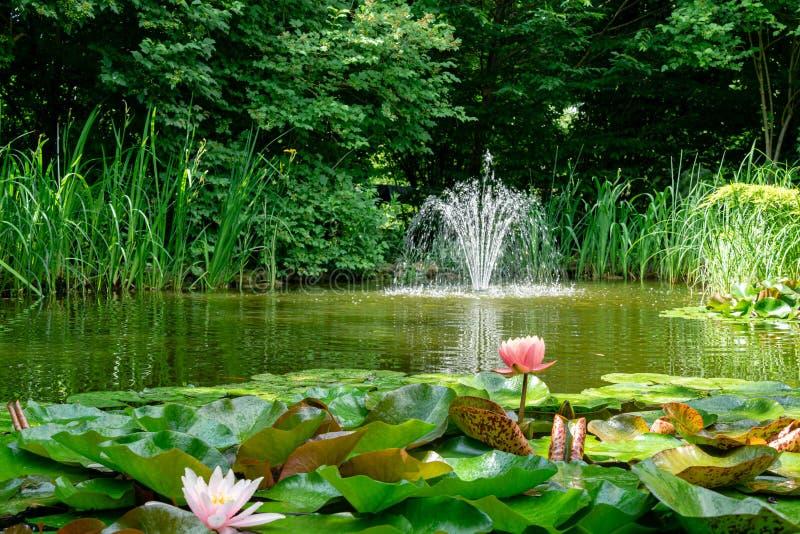 Charca hermosa del jardín con sorprender la puesta del sol anaranjada rosada de Perrys de los lirios de agua o de las flores de l foto de archivo libre de regalías