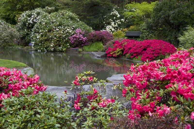 Charca hermosa del jardín de flores imagen de archivo