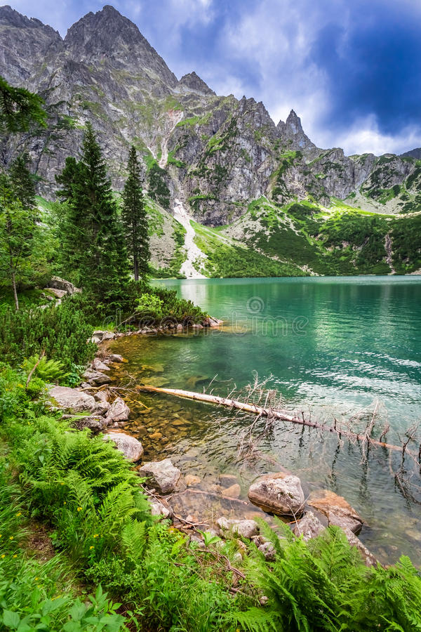 Charca hermosa en las montañas en el verano imagen de archivo