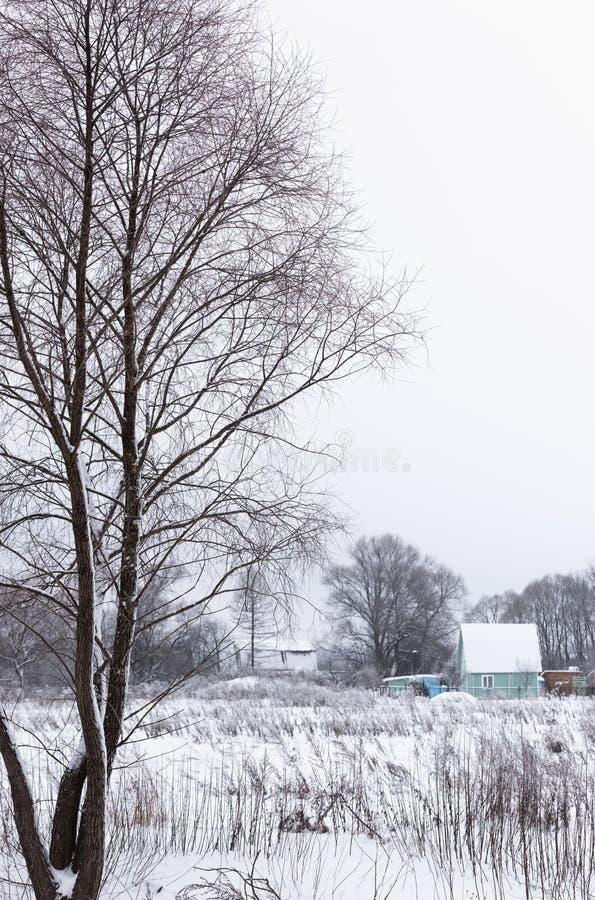 Charca no congelada en invierno imagen de archivo libre de regalías