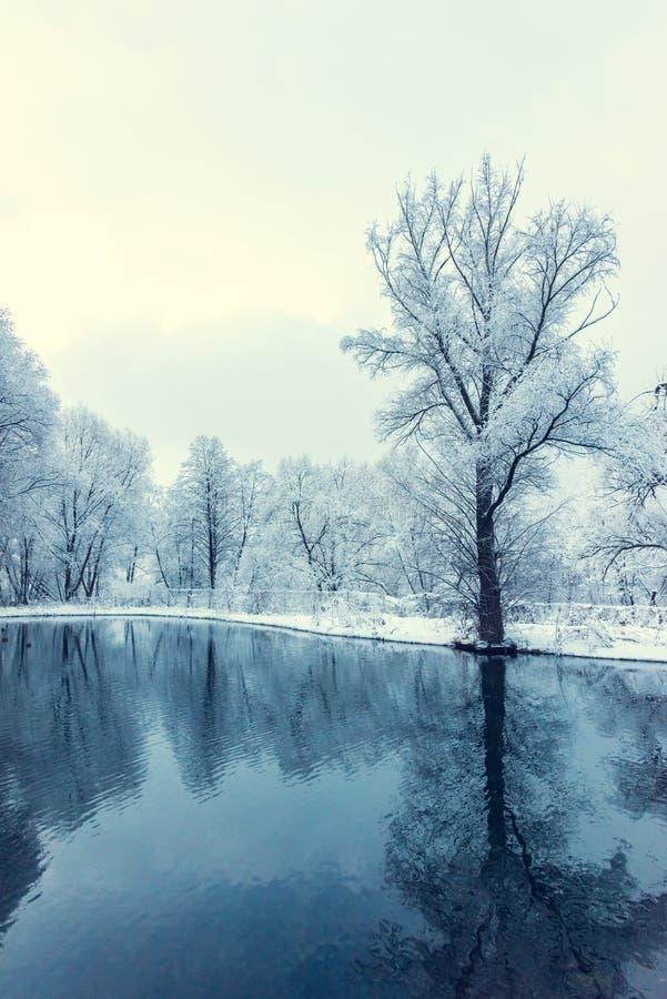 Charca no congelada en invierno foto de archivo libre de regalías
