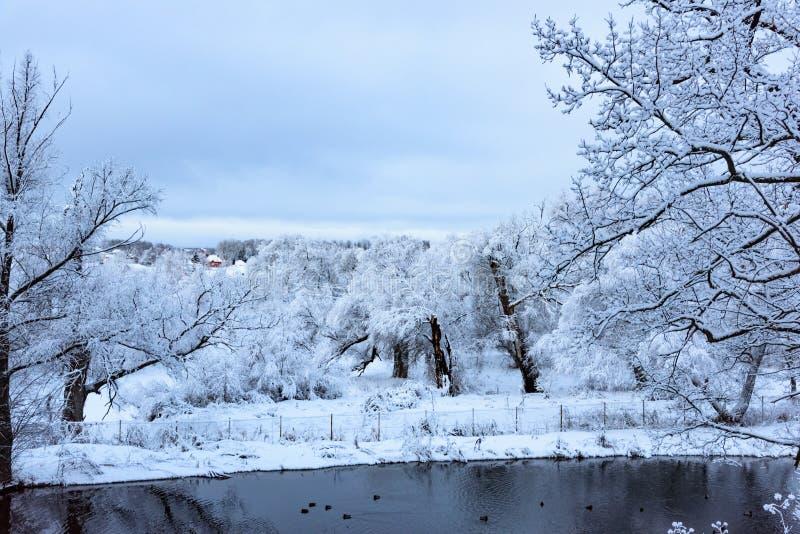 Charca no congelada en invierno foto de archivo