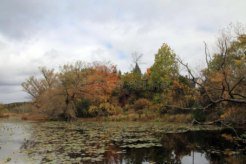 Charca Overgrown fotos de archivo