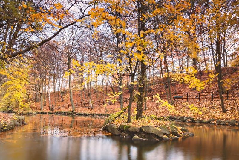 Charca tranquila en otoño fotografía de archivo