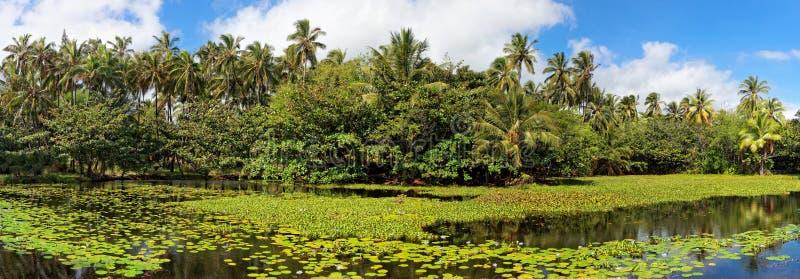 Charca tropical del lirio fotos de archivo libres de regalías