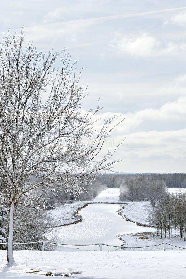 Charca y árboles helados en parque ilustración del vector