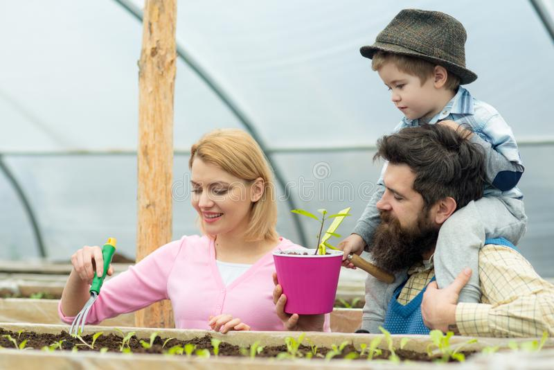 charcica Szklarniani pracownicy szczęśliwa rodzinna praca w szklarni szklarniany flancowanie z szczęśliwą rodziną Ogrodnictwa gur fotografia stock