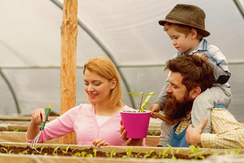 charcica Szklarniani pracownicy szczęśliwa rodzinna praca w szklarni szklarniany flancowanie z szczęśliwą rodziną Ogrodnictwa gur fotografia royalty free