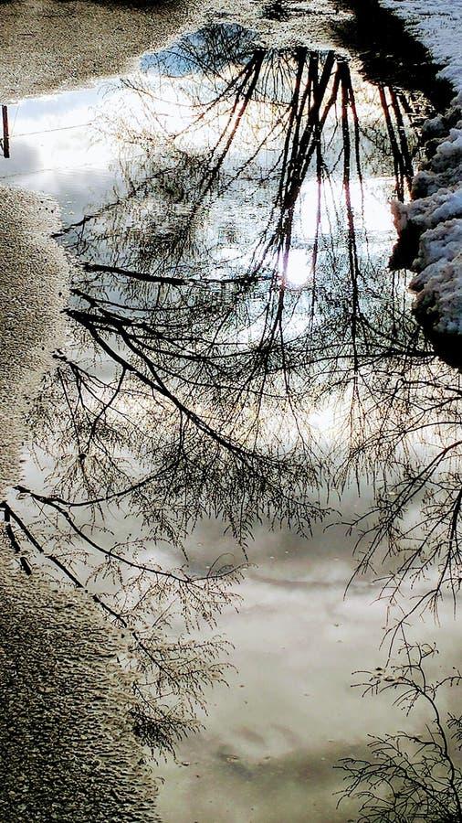 Charco con reflexiones del árbol en invierno fotos de archivo libres de regalías