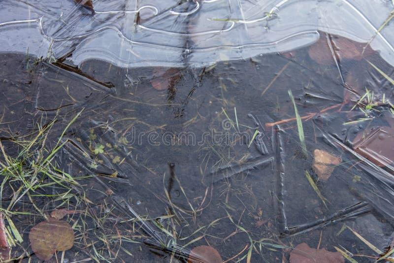 Charco cubierto con hielo fresco imagenes de archivo