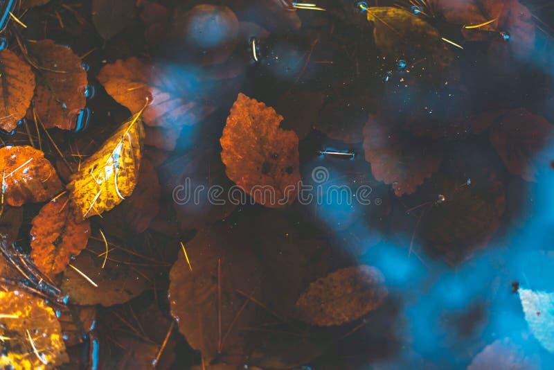 Charco en un bosque con las hojas de otoño imagen de archivo