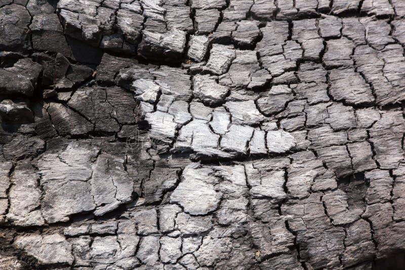 charcoal Fait à partir du burning en bois photo libre de droits
