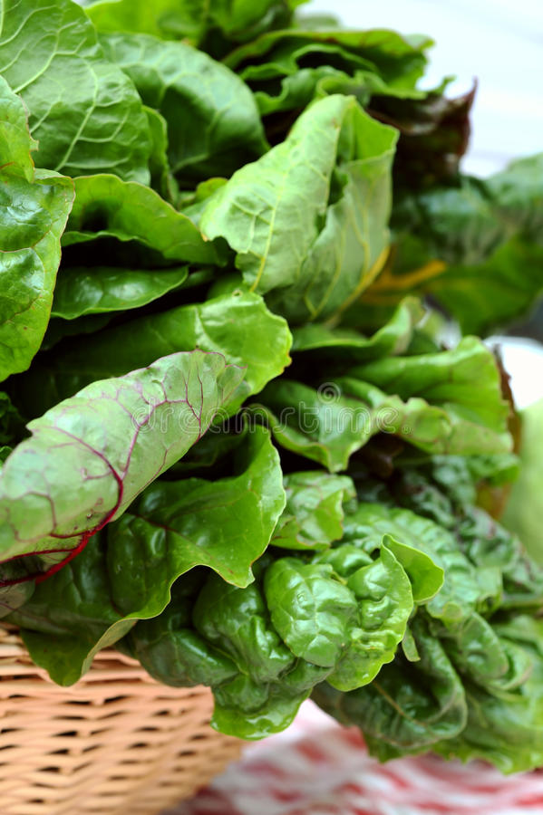 Chard, Collards, Greens, Kale, Mustards, Spinach stock image
