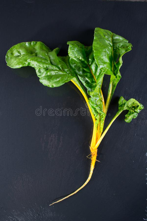 Chard plant with roots on dark slate. From above royalty free stock photography