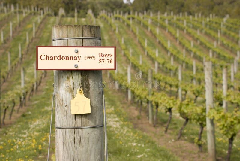 Chardonnay imágenes de archivo libres de regalías