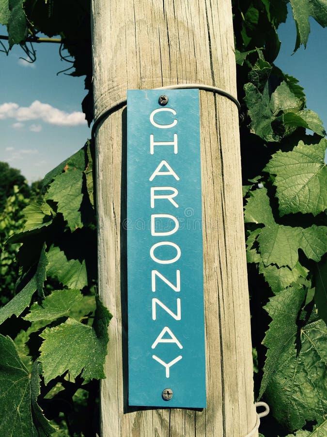 Chardonnay winogrona przy winnicą zdjęcia royalty free
