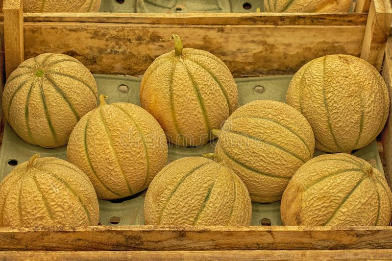 Charentais melons harvest festival in a wooden crate, ripe juicy little melon on the market. Harvesting vegetable. Yellow green melon with stripes stock image