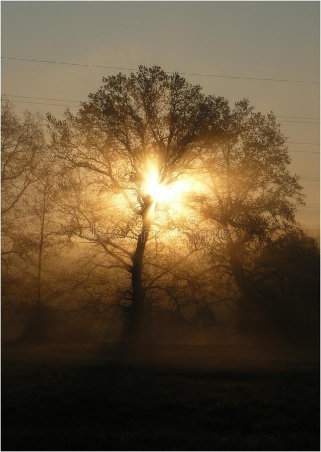 `Charging` sunrise behind the tree. This photo was taken on the meadow in the morning in the Czech Republic stock photo