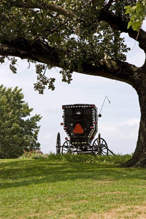 Chariot amish dans les domaines photo stock