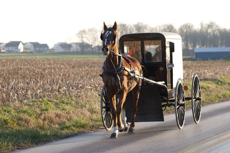 Chariot amish de cheval photos stock